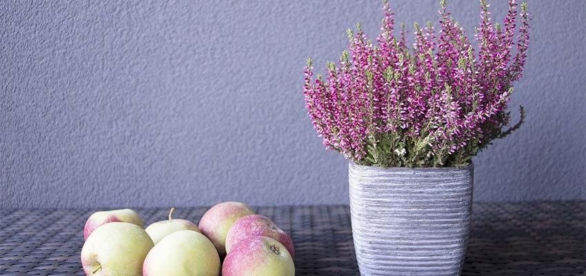 decoracion-plantas-activitas