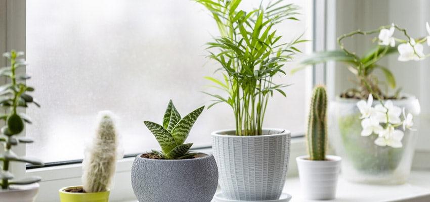 activitas - vivienda asequible - plantas