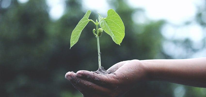 sostenibilidad-activitas